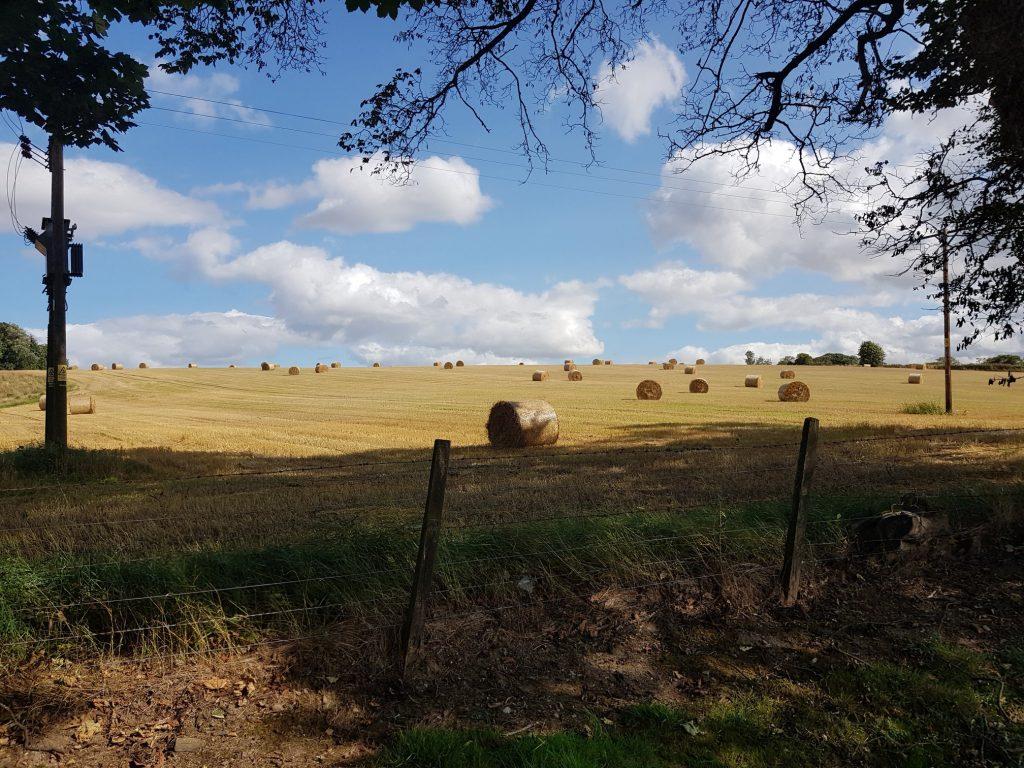 Fields Around Glendronach